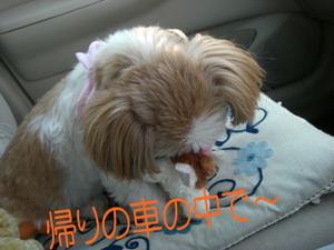 Photo_5_11