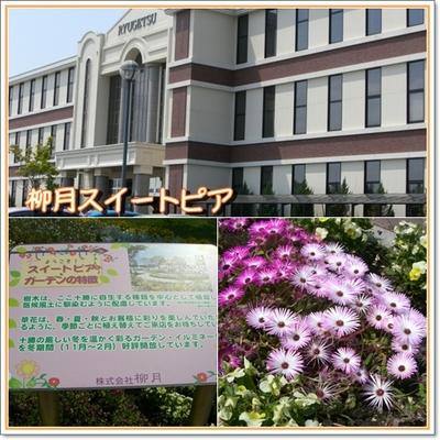 Photo_3_8
