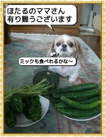 Photo_4_6
